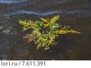 Купить «Венок, плывущий по реке», фото № 7611391, снято 13 июня 2015 г. (c) Ткач Александр / Фотобанк Лори
