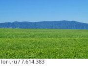 Летний Алтай. Стоковое фото, фотограф Виталий Шубарин / Фотобанк Лори