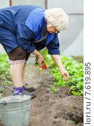 Женщина собирает урожай редиса в теплице. Стоковое фото, фотограф Евгений Чернецов / Фотобанк Лори