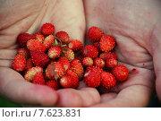 Красные ягоды земляники с зелёным листом в ладонях. Стоковое фото, фотограф Витолина Бычок / Фотобанк Лори