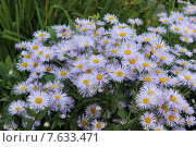 Садовые цветы. Стоковое фото, фотограф Сергей Юрьев / Фотобанк Лори