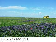 Весеннее цветение в Крыму. Желтый автобус на фоне поля цветов. Стоковое фото, фотограф Анатолий Хвисюк / Фотобанк Лори