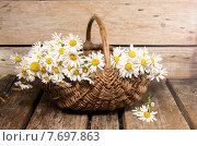 Купить «Ромашки в корзине», фото № 7697863, снято 17 июля 2015 г. (c) Наталья Осипова / Фотобанк Лори