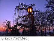 Горящий фонарь на фоне силуэта дерева в сумерках. Белград, Сербия (2013 год). Стоковое фото, фотограф Bala-Kate / Фотобанк Лори