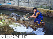 Дрессировщик крокодилов в Таиланде (2014 год). Редакционное фото, фотограф Andrei Leventcov / Фотобанк Лори