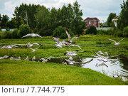 Посёлок Туношна. Стоковое фото, фотограф Батова Ольга / Фотобанк Лори