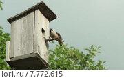 Купить «Скворечник с птицей», видеоролик № 7772615, снято 18 июля 2015 г. (c) Aleksey Popov / Фотобанк Лори