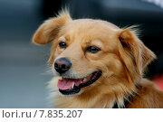 Купить «pet dog spain faithful saved», фото № 7835207, снято 20 сентября 2018 г. (c) PantherMedia / Фотобанк Лори