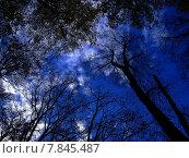 Купить «blue sky light tree bright», фото № 7845487, снято 15 ноября 2018 г. (c) PantherMedia / Фотобанк Лори