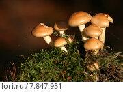 Купить «wood trunk mushrooms protects gut», фото № 7847951, снято 22 октября 2018 г. (c) PantherMedia / Фотобанк Лори