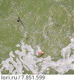 Купить «Вываживание леща из реки Дон», эксклюзивное фото № 7851599, снято 12 июля 2015 г. (c) Алёшина Оксана / Фотобанк Лори