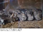Бородавочники в вольере. Стоковое фото, фотограф Денис Шелехов / Фотобанк Лори