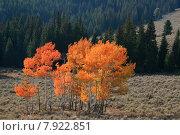 Купить «america foliage indian wyoming buzzer», фото № 7922851, снято 10 декабря 2018 г. (c) PantherMedia / Фотобанк Лори