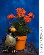 Купить «red plant flower decoration blossom», фото № 7924007, снято 22 октября 2018 г. (c) PantherMedia / Фотобанк Лори