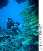 Купить «water sea sport ocean school», фото № 7956807, снято 18 июня 2019 г. (c) PantherMedia / Фотобанк Лори