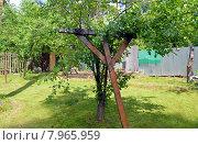 Купить «Подпорка для дерева в саду дачного участка», фото № 7965959, снято 7 июня 2015 г. (c) Александр Замараев / Фотобанк Лори