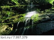 Купить «nature green water light holiday», фото № 7997379, снято 22 февраля 2019 г. (c) PantherMedia / Фотобанк Лори
