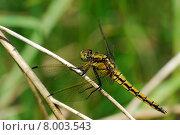 Купить «insect stalk insects dragonfly facet», фото № 8003543, снято 26 марта 2019 г. (c) PantherMedia / Фотобанк Лори
