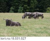 Купить «head neck horn buffalo national», фото № 8031027, снято 22 января 2018 г. (c) PantherMedia / Фотобанк Лори