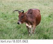 Купить «head neck horn buffalo serengeti», фото № 8031063, снято 22 января 2019 г. (c) PantherMedia / Фотобанк Лори