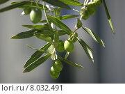 Купить «food green tree leaf grey», фото № 8032491, снято 23 февраля 2019 г. (c) PantherMedia / Фотобанк Лори
