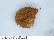 Купить «leaf winter structure snow ice», фото № 8059231, снято 15 февраля 2019 г. (c) PantherMedia / Фотобанк Лори