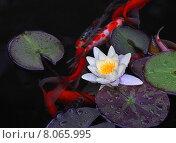 Водяная лилия. Стоковое фото, фотограф Vladimir Oboliaev / Фотобанк Лори