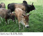 Купить «head neck horn buffalo 879», фото № 8076555, снято 22 января 2018 г. (c) PantherMedia / Фотобанк Лори