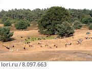Купить «nature browse heath heidelandschaft heidepflanzen», фото № 8097663, снято 19 сентября 2019 г. (c) PantherMedia / Фотобанк Лори