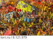 Купить «Вдвоем на встречу зиме. Голубика на фоне укрытого лишайниками камня.», фото № 8121979, снято 13 сентября 2013 г. (c) Юрий Карачев / Фотобанк Лори