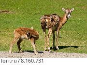 Купить «baby meadow newborn neonate suckle», фото № 8160731, снято 24 марта 2019 г. (c) PantherMedia / Фотобанк Лори