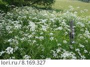 Купить «caucasian nature green plant european», фото № 8169327, снято 23 марта 2019 г. (c) PantherMedia / Фотобанк Лори