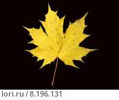 Купить «black yellow leaf autumn leaves», фото № 8196131, снято 15 февраля 2019 г. (c) PantherMedia / Фотобанк Лори