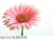Купить «fresh natural plant flower pink», фото № 8200819, снято 15 декабря 2018 г. (c) PantherMedia / Фотобанк Лори