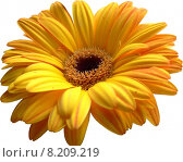 Купить «yellow plant flower orange garden», фото № 8209219, снято 15 декабря 2018 г. (c) PantherMedia / Фотобанк Лори