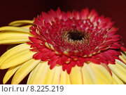 Купить «beautiful red image light yellow», фото № 8225219, снято 15 декабря 2018 г. (c) PantherMedia / Фотобанк Лори