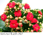 Купить «green red plant flower leaves», фото № 8231767, снято 22 октября 2018 г. (c) PantherMedia / Фотобанк Лори