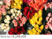 Купить «birthday roses florist multicoloured kiosk», фото № 8244435, снято 19 октября 2019 г. (c) PantherMedia / Фотобанк Лори