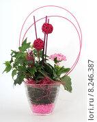 Купить «plant flower pink gesteck green», фото № 8246387, снято 22 октября 2018 г. (c) PantherMedia / Фотобанк Лори