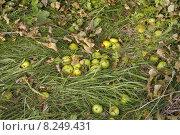 Купить «green grass autumn leaves fall», фото № 8249431, снято 15 февраля 2019 г. (c) PantherMedia / Фотобанк Лори