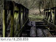 Купить «old forest bridge swamp decompose», фото № 8250859, снято 21 марта 2019 г. (c) PantherMedia / Фотобанк Лори