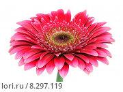 Купить «nature plant flower blossom wellness», фото № 8297119, снято 15 декабря 2018 г. (c) PantherMedia / Фотобанк Лори