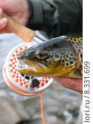 Купить «angle fish fishing ireland trout», фото № 8331699, снято 22 октября 2018 г. (c) PantherMedia / Фотобанк Лори