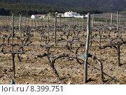 Купить «Vineyards in winter», фото № 8399751, снято 22 сентября 2019 г. (c) PantherMedia / Фотобанк Лори