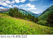 Купить «Альпийский луг на горе Чегет, Кабардино-Балкария, Приэльбрусье, Россия», фото № 8458523, снято 5 июля 2015 г. (c) katalinks / Фотобанк Лори