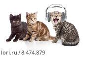 Два котенка наблюдают как третий слушает музыку в наушниках. Стоковое фото, фотограф Андрей Кузьмин / Фотобанк Лори