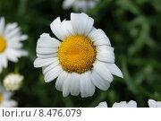 Муравей на цветке. Стоковое фото, фотограф Марина Пыхова / Фотобанк Лори