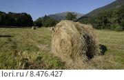 Купить «Скошенное и свернутое в рулон сено на лесной поляне в горах Кавказа», эксклюзивный видеоролик № 8476427, снято 21 июля 2015 г. (c) Алексей Бок / Фотобанк Лори