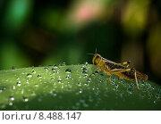 Купить «water leaf wet drop insect», фото № 8488147, снято 16 октября 2019 г. (c) PantherMedia / Фотобанк Лори