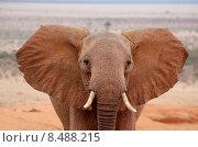 Купить «portrait wild wildlife africa safari», фото № 8488215, снято 22 октября 2018 г. (c) PantherMedia / Фотобанк Лори
